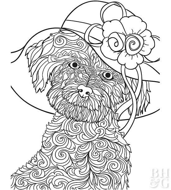 Pictures of Furry Friends to Color | Dog coloring page ...