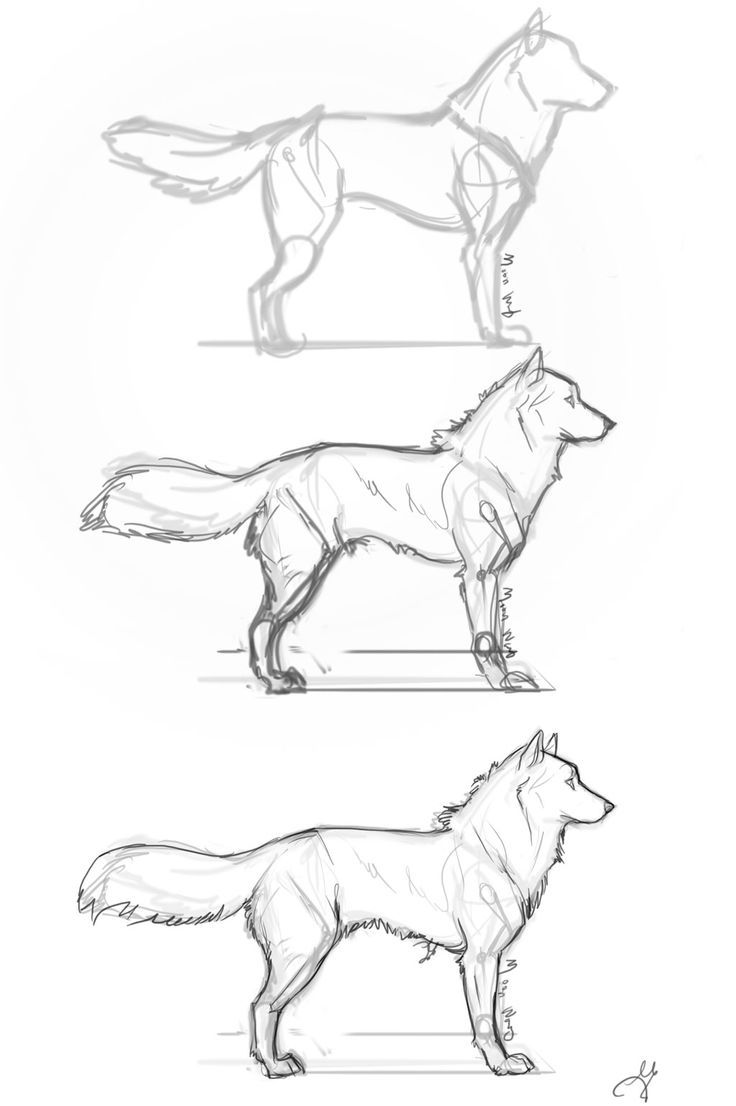 fluffy dog step by step by whisperpntrdeviantartcom on husky drawinganime