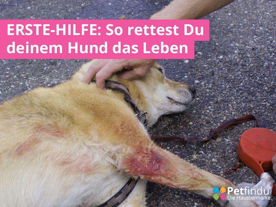 Erste Hilfe So Rettest Du Deinem Hund Das Leben Petfindu Blog Hunde Gesunde Hunde Hunde Korpersprache