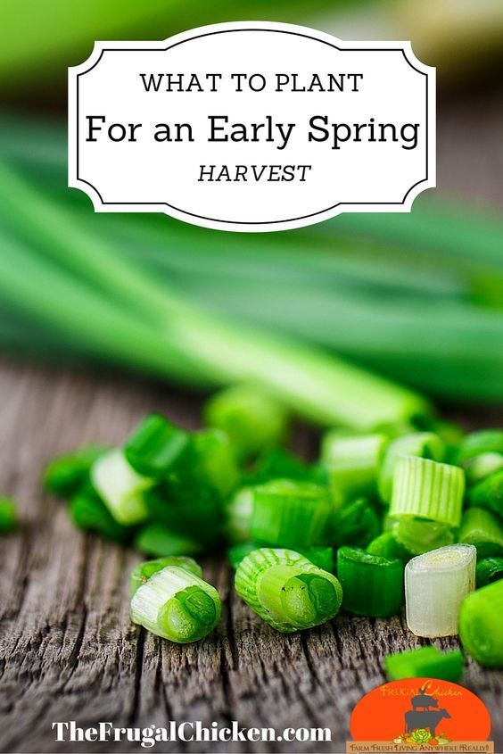 What to grow in colder weather (Jan/Feb/March) for an early spring harvest. I love what I can grow!