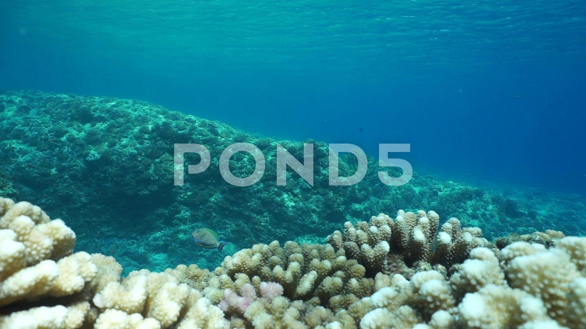 Underwater Landscape Ocean Floor Reef Slope Corals Stock Footage Ocean Floor Underwater Landscape Ocean Underwater Landscape
