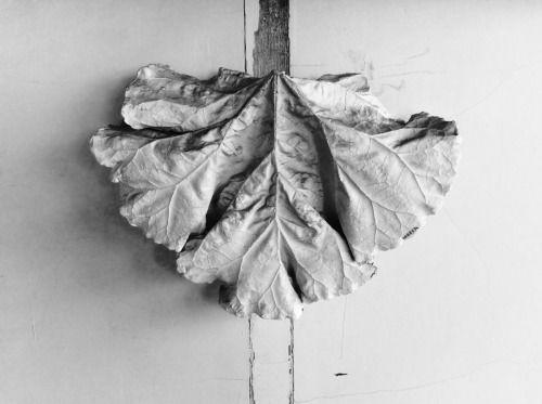Feuille de rhubarbe _ 1991 _ yan le marchand