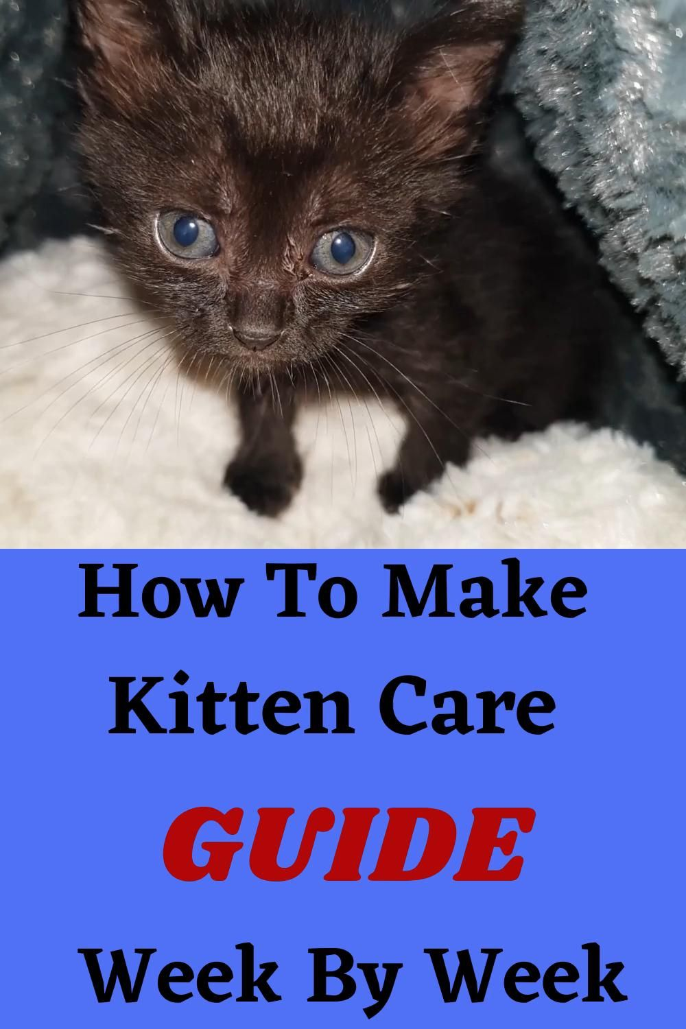 Secret Techniques To Improve Caring For Kitten Week By Week Video In 2020 Kitten Care Cat Care Tips Cat Memes