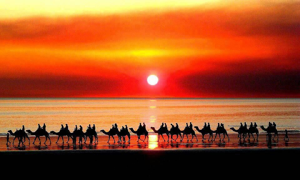 낙타대행진