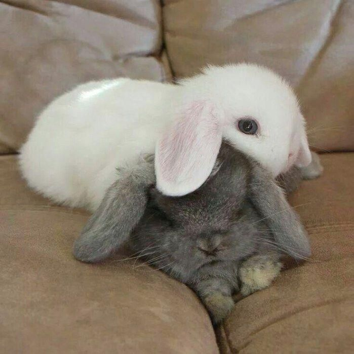 #Adorable  #bunny  #companion  #Family  #furry  #pet  #simple #furry #companion If you are looking for a furry companion which is not only adorable, but simple to keep, then look no further than a family pet bunny. -