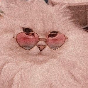 Photo of cc Angel Kittiyachavalit en pinterest. Gatos Mascotas Dulces, # Ángel #en #Animales #Gatos … – Gafas