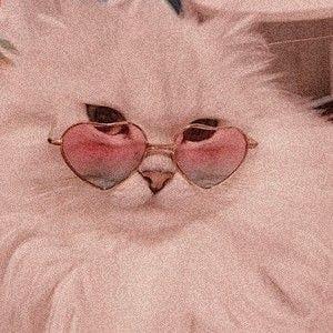 Photo of cc Angel Kittiyachavalit on pinterest. Cats pets cute – aesthetic – # …