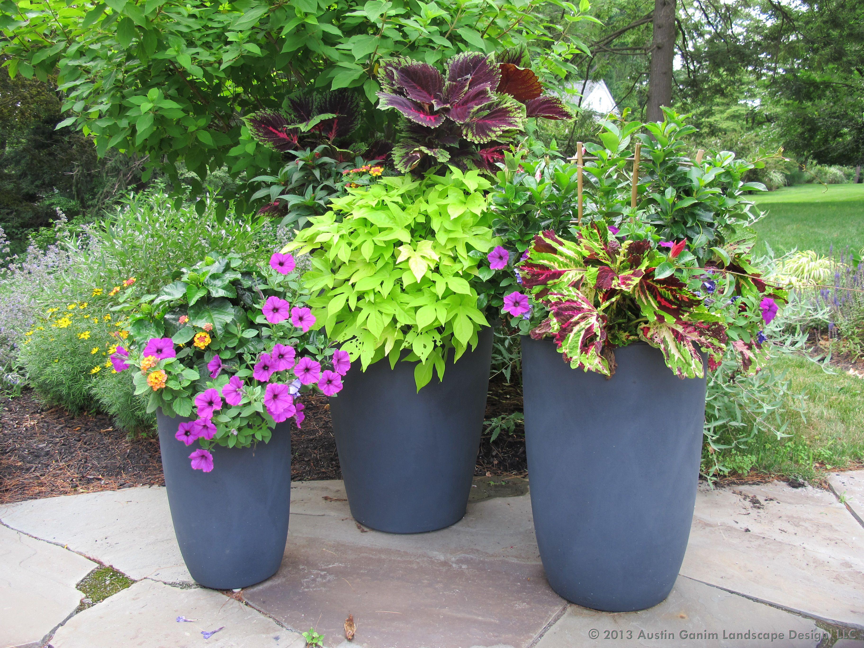 Austin Ganim Landscape Design, LLC This grouping of cylinder ...