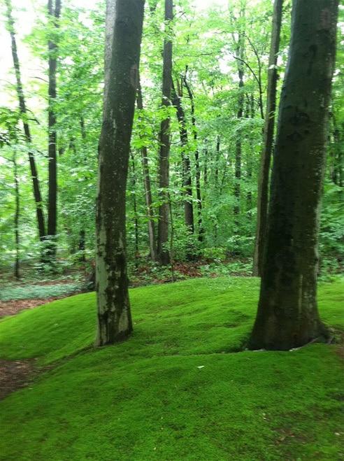 Spaghnum Moss Moss For Sale Ground Cover Plants Backyard