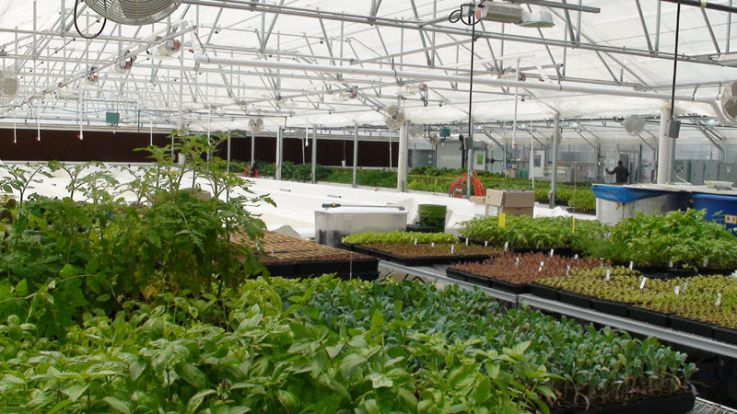 Greater Growth Llc S New State Of The Arts Aquaponics Greenhouse