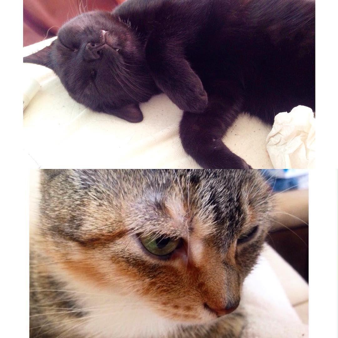 Babies kitty kitties cat meow animallovers catmom animals