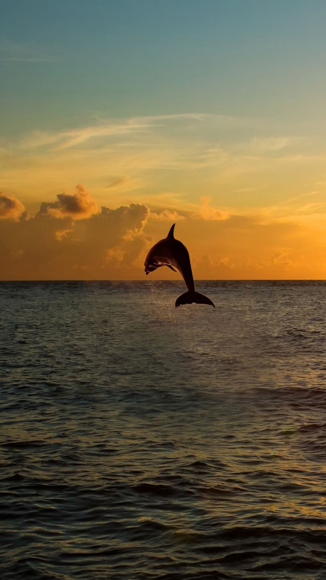 Twilight Jumping Dolphins iPhone 6 plus wallpaper Hd