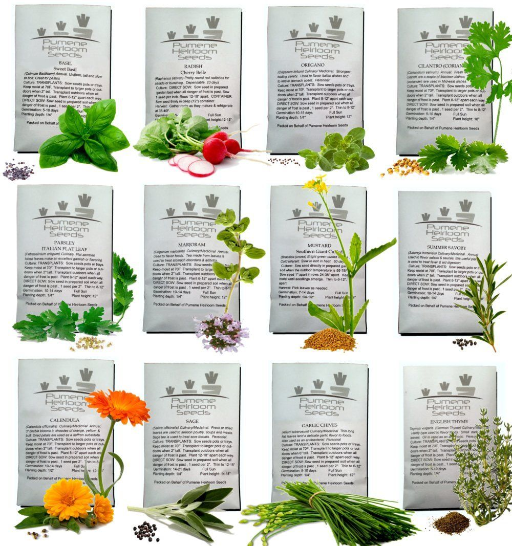 English garden plant labels - Plants