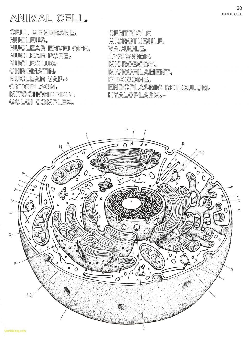 Animal Cells Coloring Worksheet Coloring Pages Animal Cell Coloring Sheet Coloring Pages Cells Worksheet Animal Cells Worksheet Plant And Animal Cells [ 1384 x 1024 Pixel ]