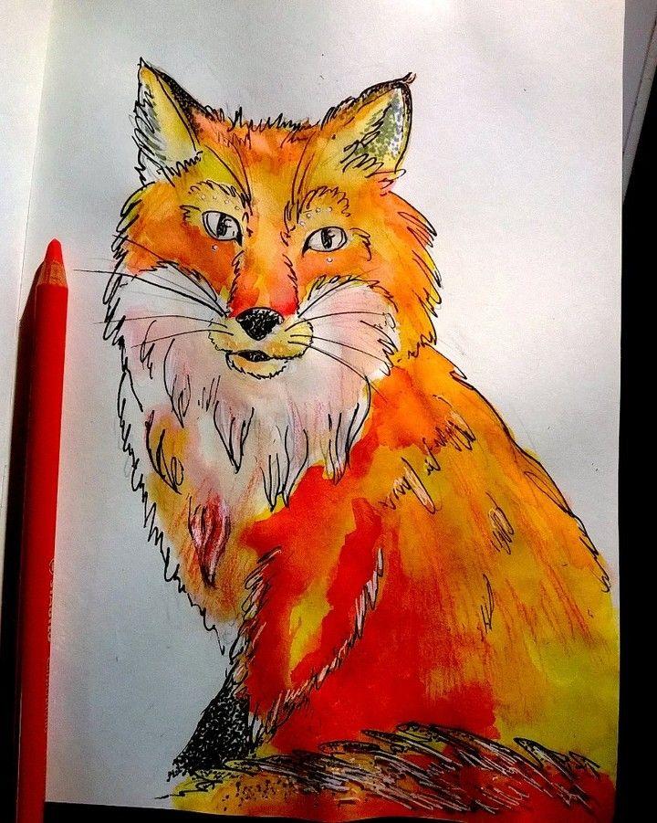 #fox #sketch #sketchbook #sketching #ecoline #color #colors #orange #artstagram #artistsoninstagram #artistofinstagram #artistoninstagram #art #foxes #arttherapy