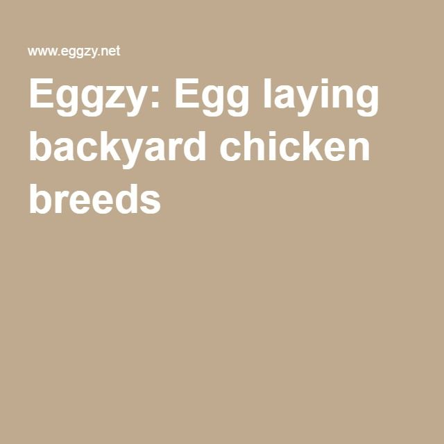 Eggzy: Egg laying backyard chicken breeds