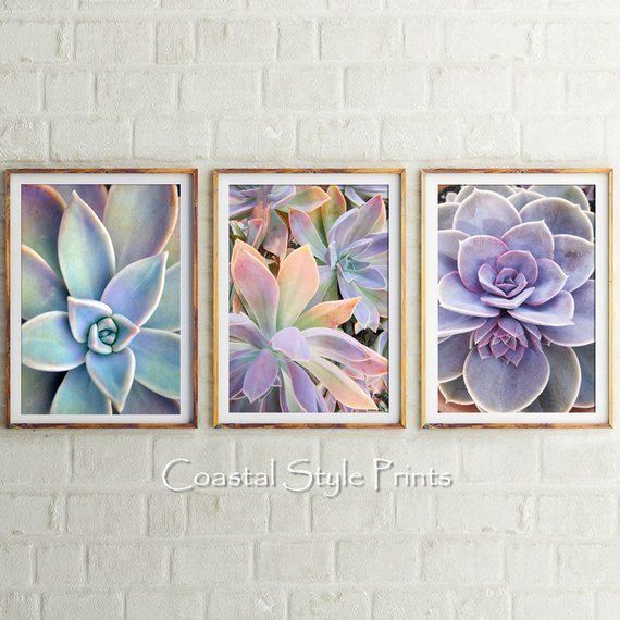 Wall Art Prints, Set Of 3 Prints,Cactus Wall Art,Cactus Print,Wall Decor,Cactus Photography,Botanical Print Set,Printable Art,Succulents,Set is part of Cactus decor Hanging - 3949 Please note colours on different monitors may vary slightly and may be different again with each printer   All artwork copyright © 2018 Coastal Style Prints  Purchase is for personal use only  Strictly not for resale  Thanks so much for stopping by, Alice