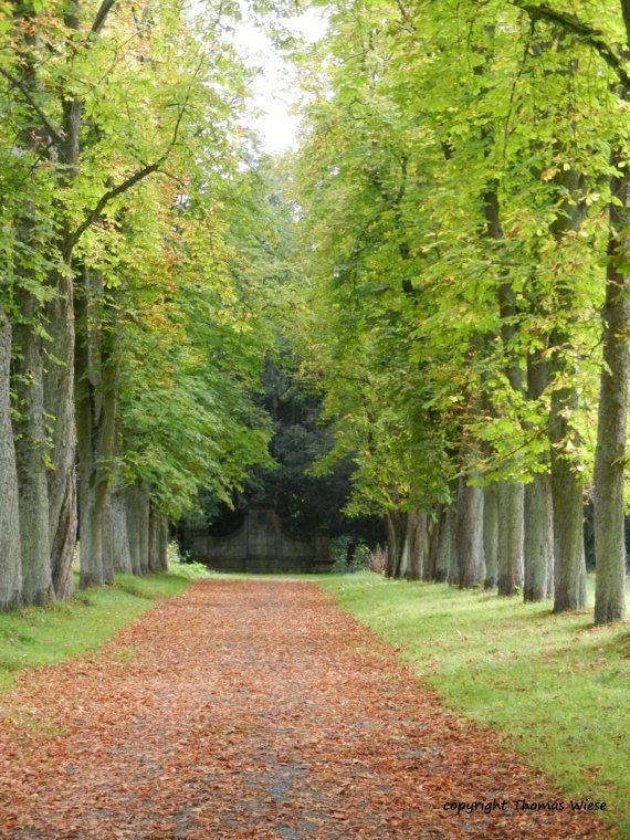 Photography chestnut avenue at Schloss by abrakadabra5910 on Etsy