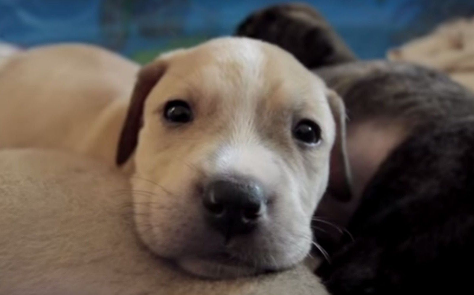 Amazing Foster Parents Take in 10 Desperate Orphaned