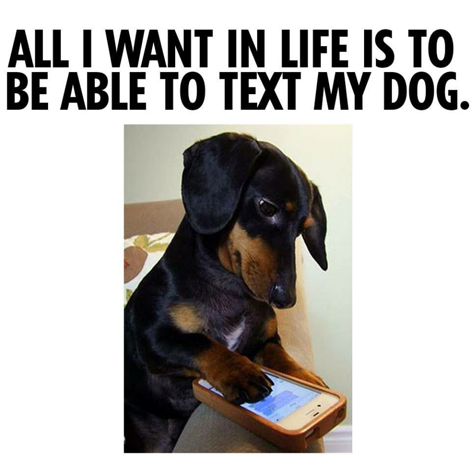 All I Want In Life Is To Be Able To Text My Dog Dog Quotes Dogs