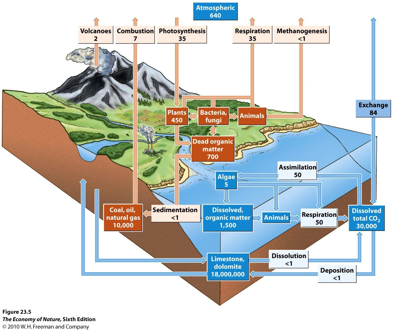 Ecosystem diagram carboncycle ecosystems systems thinking ecosystem diagram carboncycle pooptronica Image collections