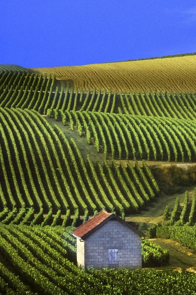 Vineyards Champagne France