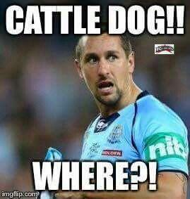 600ce326170796e4fd05336c9702cf18 pin by nrl queen on nrl memes pinterest nrl memes, rugby