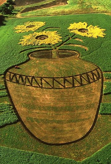 Sunflower art in Kansas ~ aerial photo of a field planted with sunflowers (yellow), soy (dark green), red clover (light green).