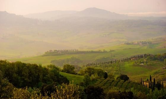 Cypress Lined Hills Of Tuscany, Italy