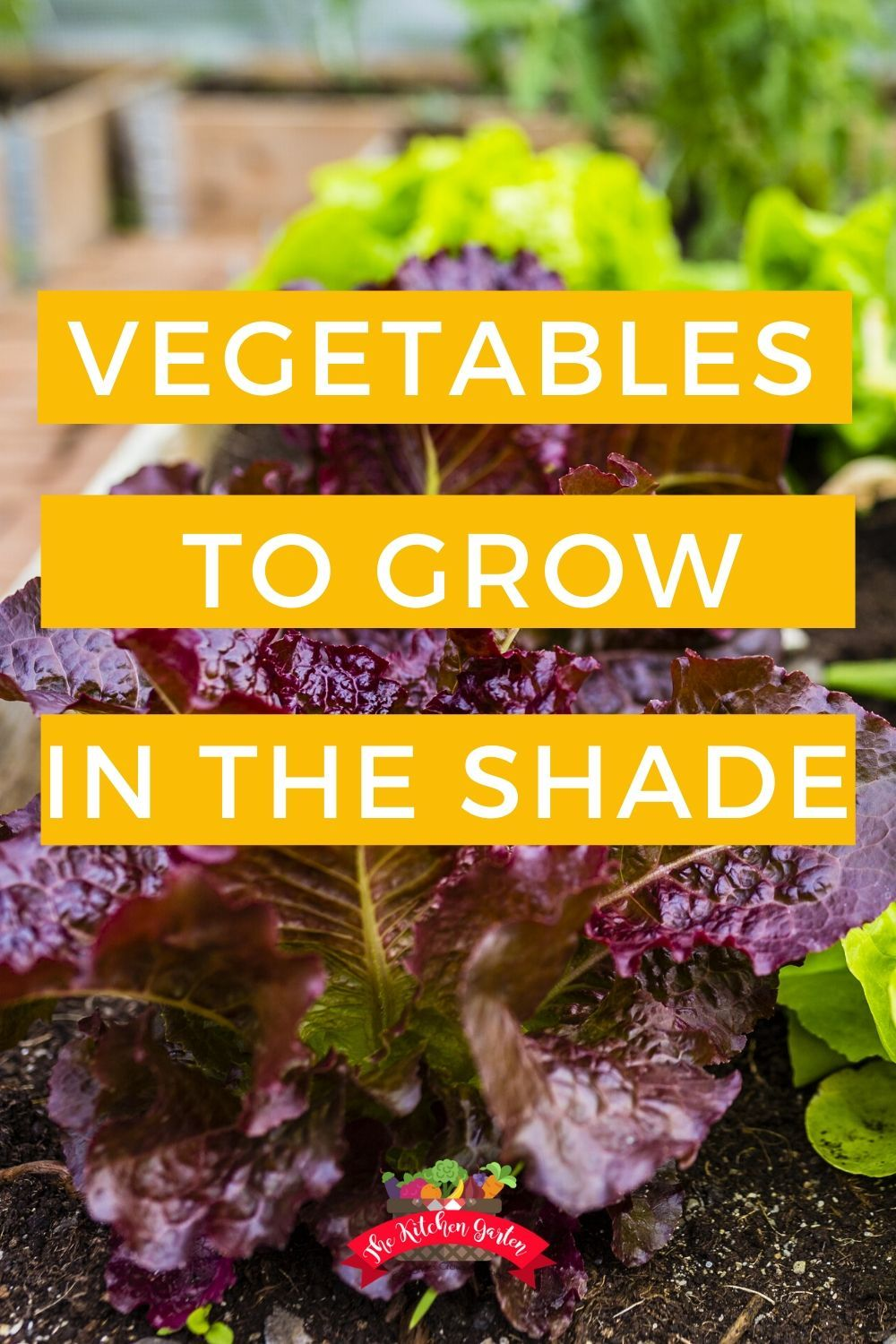 Vegetables that Grow in the Shade Growing vegetables