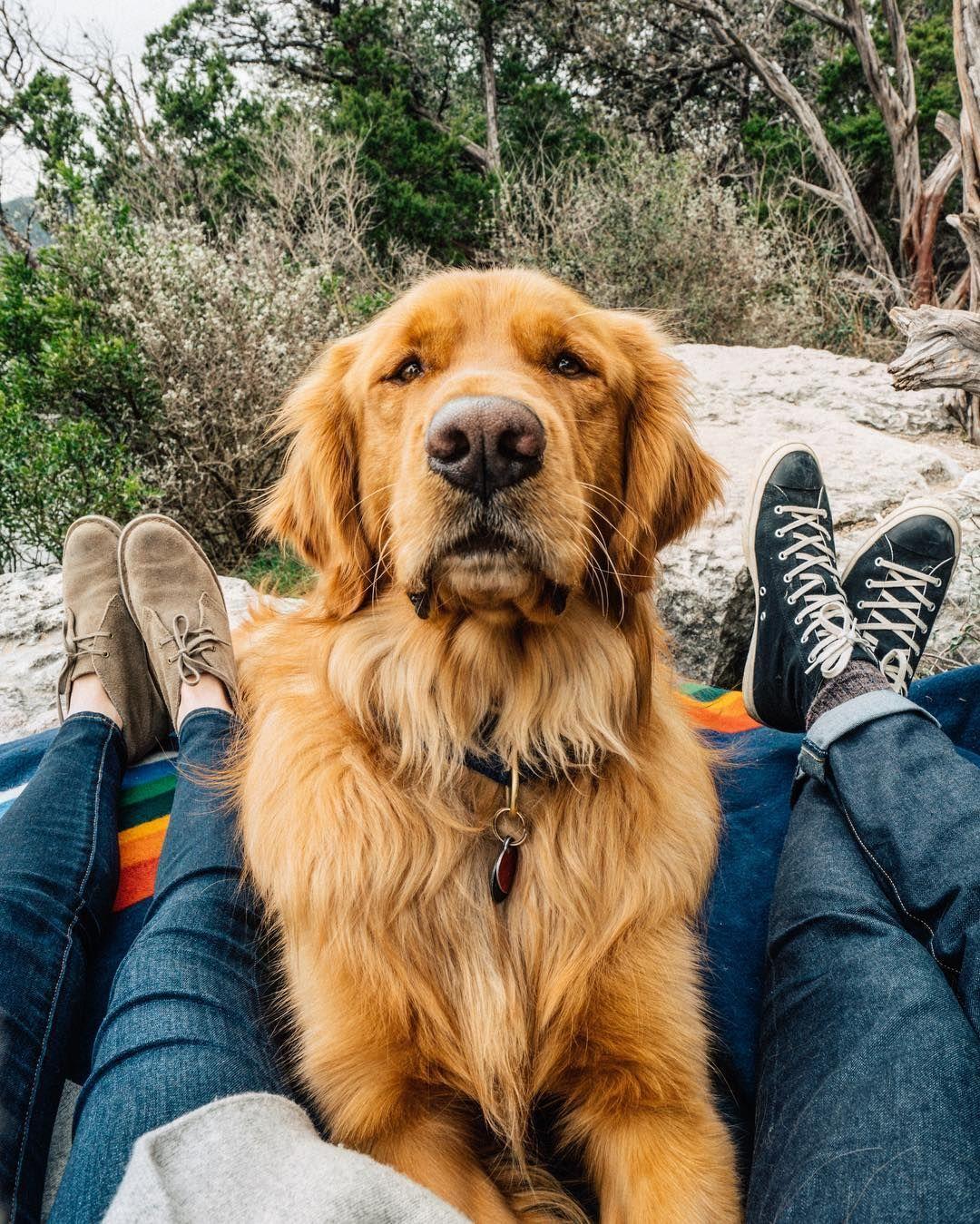 Trainerpro Dog Bark Collar Humane Anti Barking Training Collar