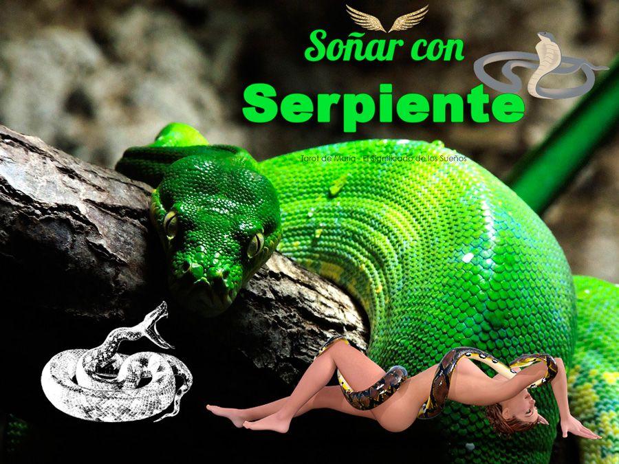 Soñar Con Serpientes O Víboras Significado De Lo Sueños Significado De Los Sueños Serpientes Sueños