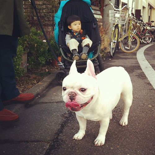 Brace yourselves, because there's about to be some serious cuteness up in here. Have you seen Aya Sakai's Instagram feed? She's a Tokyo mom who posts daily photos of her son and his best friend, his French bulldog Muu