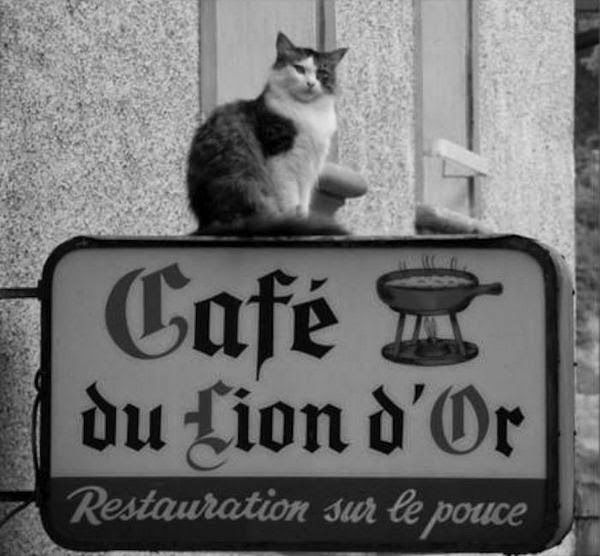 cat sitting on the sign of the cafe brasserie cafe du lion d or