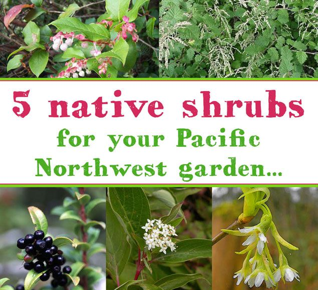 Five Pacific Northwest Native Shrubs To Plant In Your Garden Pacific Northwest Garden Northwest Garden Native Plant Landscape