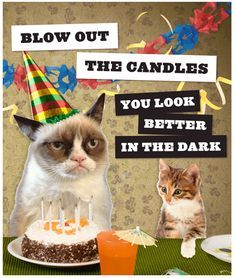 Grumpy cat on pinterest grumpy cat birthday grumpy cat and grumpy cat birthday wishes funnybirthday bookmarktalkfo Image collections