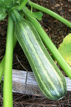 Try planting some of these veggies which dont shy away from a