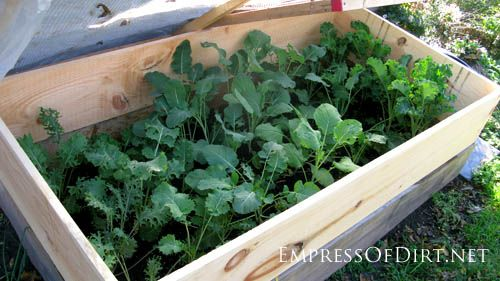 Did You Know You Can Grow Vegetables In The Winter 400 x 300