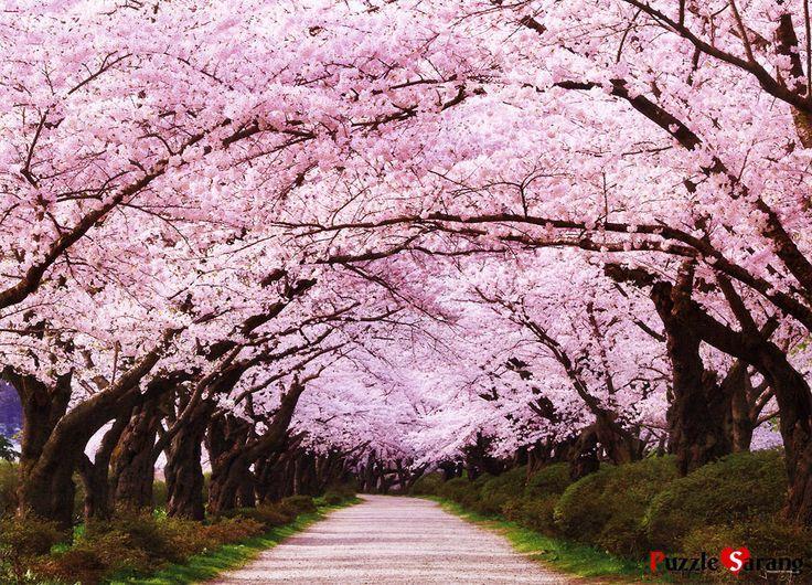 Resultado de imagen para arbol de sakura lugares para for Arboles de jardin fotos