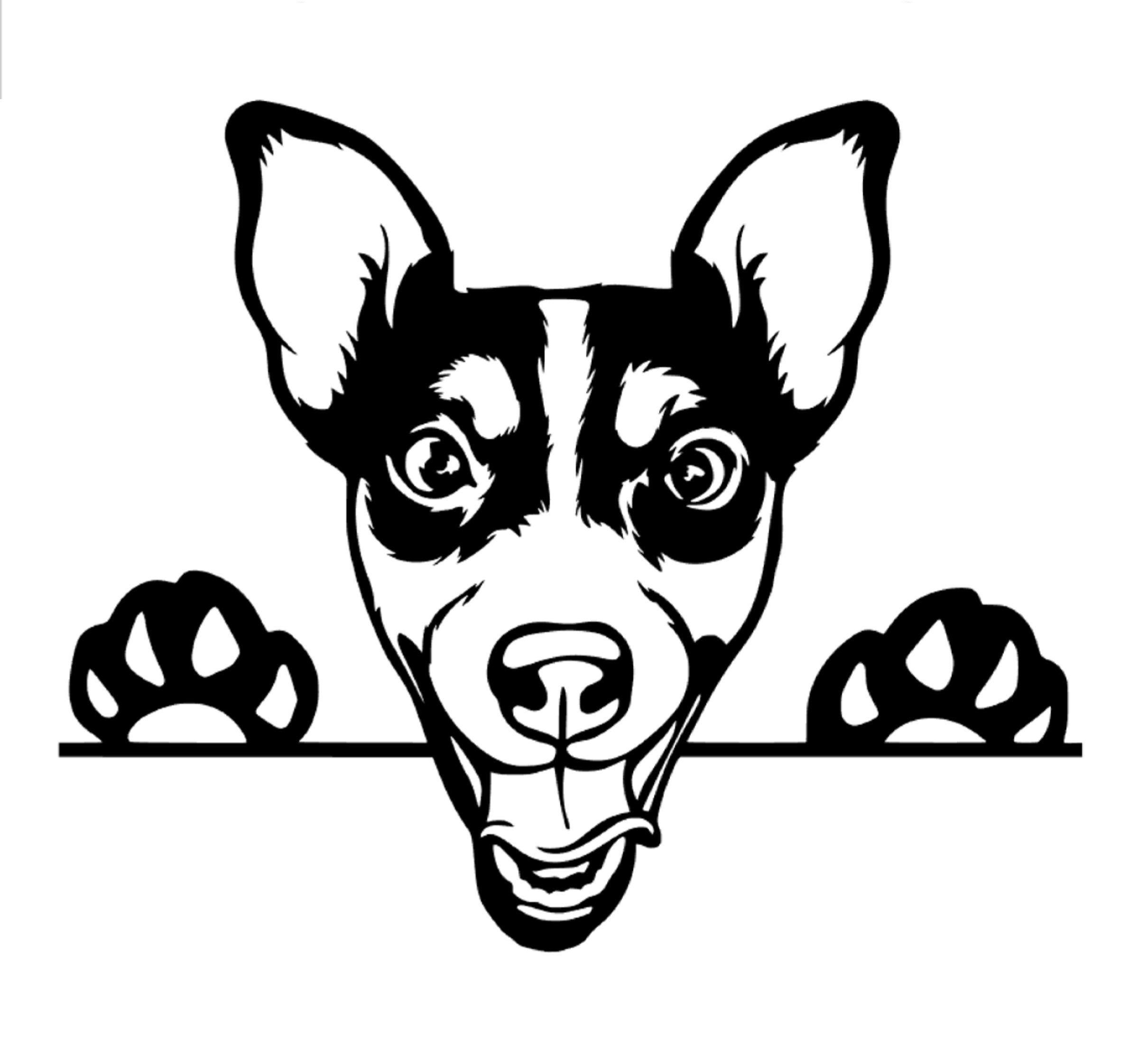 Jack Russell Peeking Car Decal Sticker Jack Russell Terrier Dog Sticker Vinyl Window Cute Jrt Gifts Jack Russell Lover Jack Russell Dog Jack Russell Dog Stickers Jack Russell Dogs [ 2212 x 2420 Pixel ]