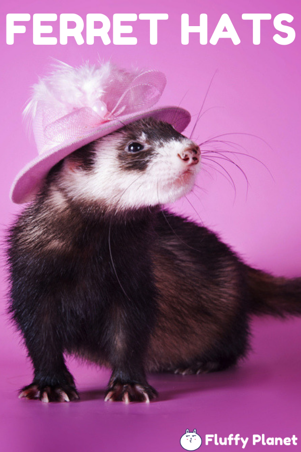 Cool And Awesome Hats For Ferrets 2020 Ferret Animal Dress