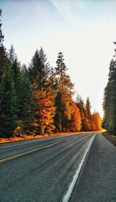 #roads #art #photography #travel #adventure #sunsets #roadtrip #beautiful #trees #pnw #northwest #color
