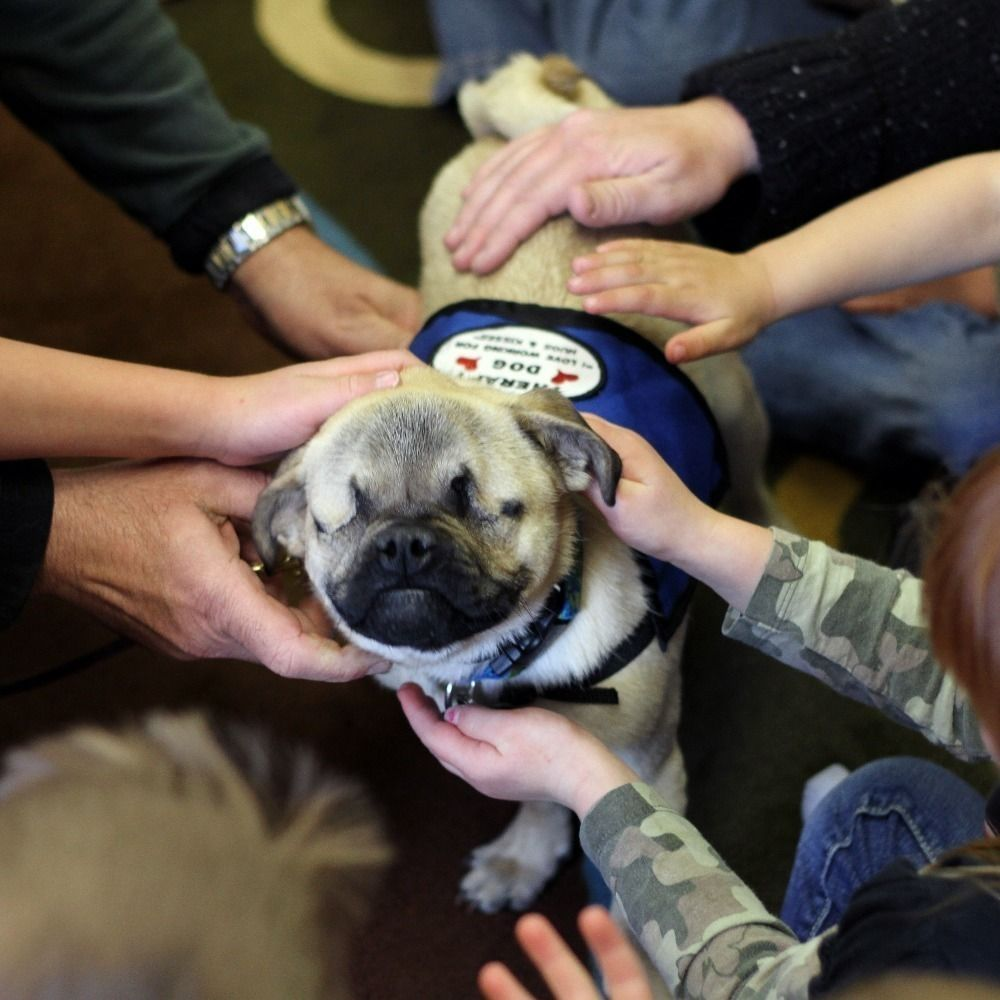 <p>In this article from the Herald News, you'll learn about </p><b>Xander the pug </b><p>who doesn't have eyes, but has a huge heart. The proud pup is working to make people happier as a therapy dog helping organizations like Klamath-Lake CARES (child abuse response and evaluation services) and Hands and Words are not for Hurting.</p><p>