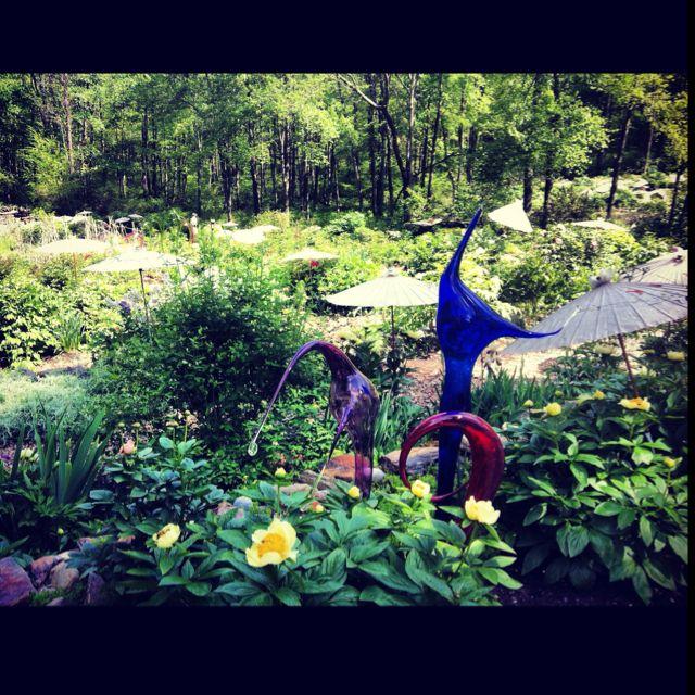 Cricket hill garden ..