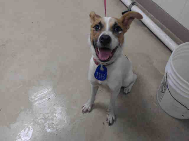 Puff Id A470914 Urgent Harris County Animal Shelter In Houston Texas Adopt Or Foster I Am Going To The Next Mobile A Animal Shelter Animals Adoption