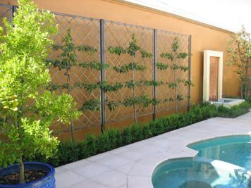 Freestanding Diagonal Lattice Panels