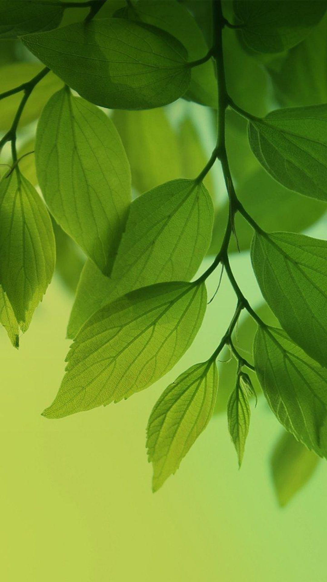 get free leaf live wallpaper on your screen
