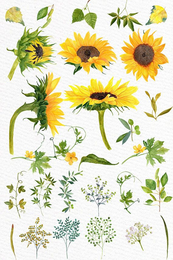 """Photo of Sunflower Watercolor clipart: """"SUNFLOWER CLIP ART"""" Wedding clipart Floral clipart Separate flowers Diy wedding Greeting Cards Yellow flowers"""