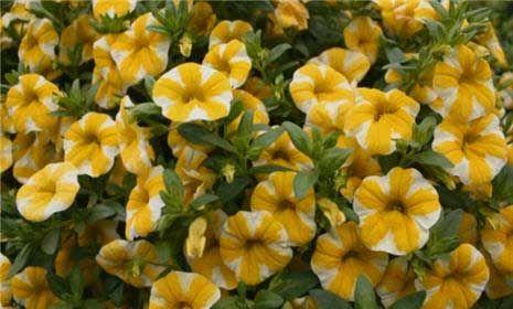 The Best Easy Care Perennial Flowers Perennials Flower