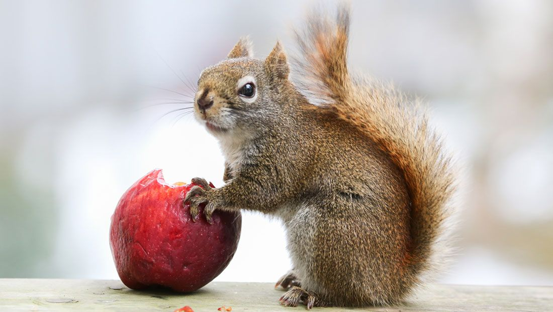 Defend your fruit trees from squirrels fruit trees